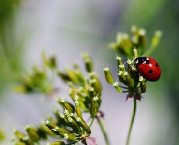 ladybug-316316_1280